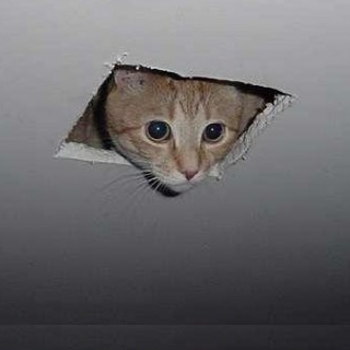 Ceiling Cat is watching you...